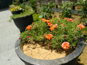 Asus ZenFone Max Pro M1 Camera  Captured Plant