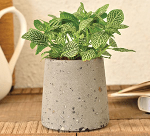 potted_indoor_plant